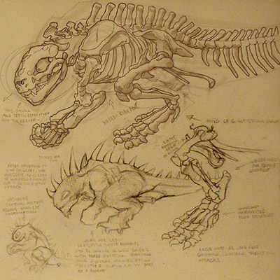 Lizard Anatomy: Skeleton